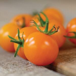 """Tomato Sun Sugar (1"""")"""