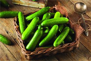Cucumber - Burpless