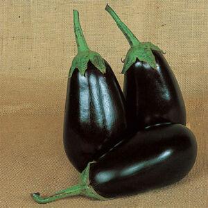 Eggplant Dusky