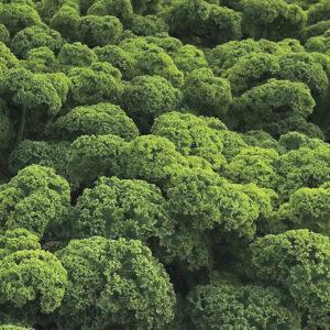 Kale Curly Prizm