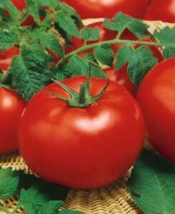 Tomato Big Beef (3/4 lb.)